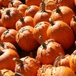 Top 10 Atlanta Area Hayrides and Corn Mazes for Fall 2011