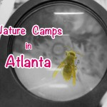 Guide to Nature Summer Camps in Atlanta 2013