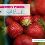 Strawberry Picking in Atlanta and North Georgia